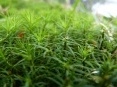 Little leaves